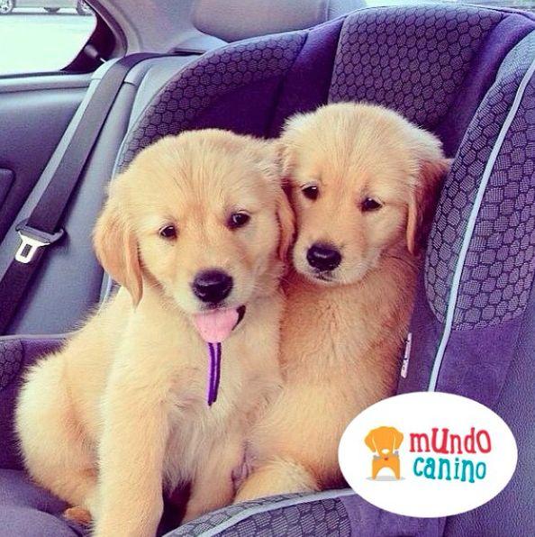 Amigos inseparables ❤ . #Perro #Dog #Canino #Cachorros #Puppy #Ternura #Animales #Amor #Felicidad #AmigoFiel #AmorCanino #AnimalLover #AmoLosPerros #Alegria #Mascota #Domestico #Vida #Peluche #Puppy #MeEncanta #MundoCanino #Pequeño #Compañia #Hueso #Pelota #Jugando #DiaDeCampo #Campo #Selfie . . @mundocaninoofi la cuenta más canina de pinterest