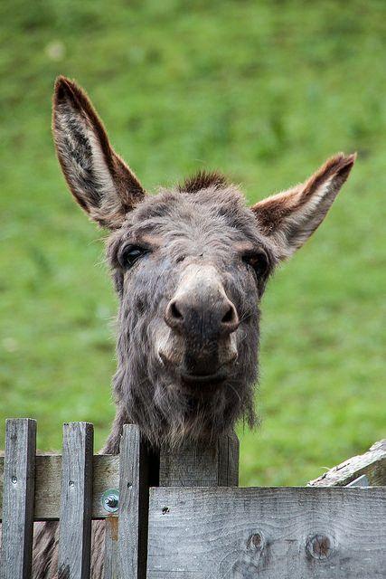 donkey king | von luz.marsen