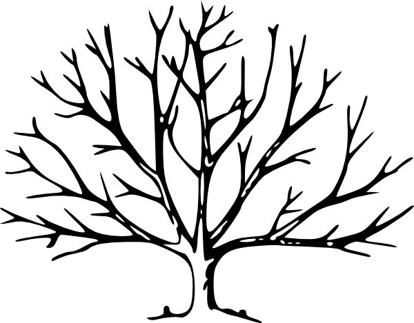 Use this bare tree to print and color according to what you are seeing this time of year. If it's spring, draw what you see on the trees - small, patchy areas of green. If it's summer, fill it up.. If it's fall, color it accordingly. If it's winter, draw on some of the birds you're seeing or snow & ice!