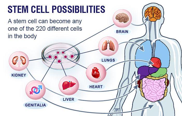 364 Best Images About Stem Cells Crispr Cas9 On Pinterest