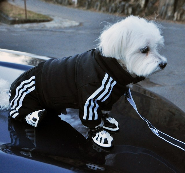#Adidas Doggy Tracksuit | 'Cause I'm an 80's Kid. | If I had a dog. #Run #ItsLikeThat