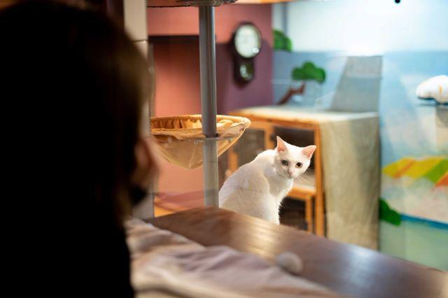 保護猫カフェを併設した宿泊施設 ねこ浴場 ねこ旅籠 が大阪にオープン Tabi Labo 猫 カフェ 猫 ねこ