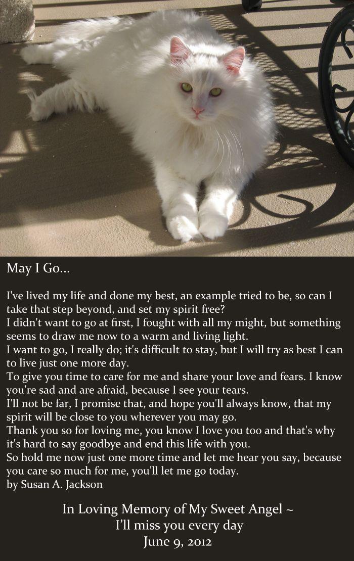In Loving Memory June 9, 2012 My Pets Cats, Pet
