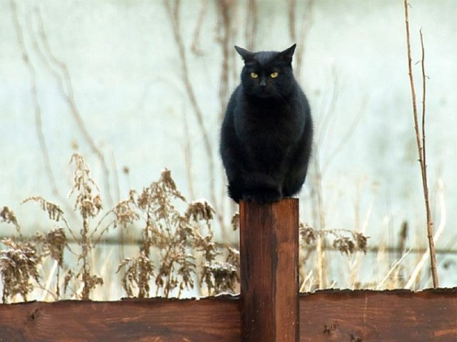 640x480 black cat Black cool picture HD Wallpaper
