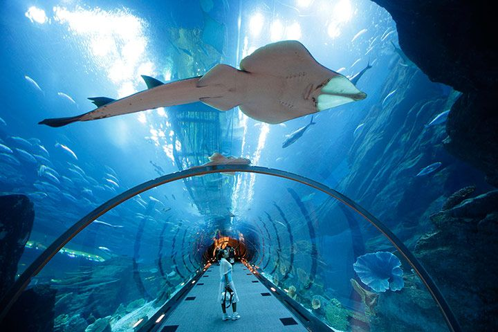 Dubai Mall | Dubai Aquarium & Underwater Zoo is located inside Dubai Mall.
