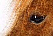 Horaire et Tarifs - Centre d'équitation Nouvelle-France, randonnée à cheval, équitation en montagne