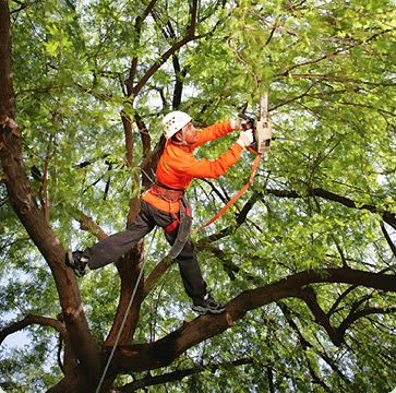 tree loppers in Melbourne who have aimed to provide the affordable tree lopping and tree removal services to their customers.