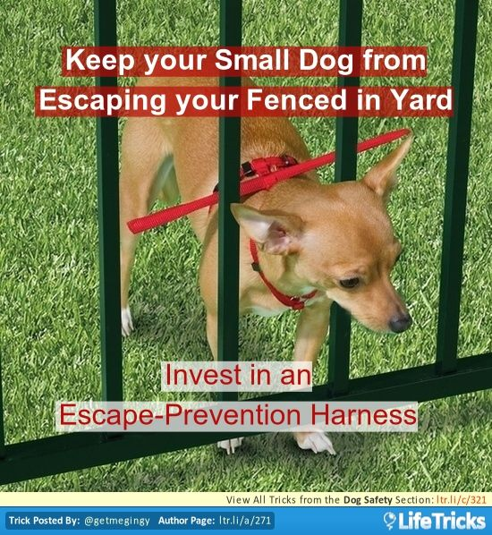 dog safety keep your small dog from escaping your fenced in yard unsorted pinterest. Black Bedroom Furniture Sets. Home Design Ideas