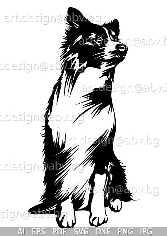 Vector Dog Border Collie Ai Png Pdf Eps Svg Dxf Jpg Etsy In 2021 Border Collie Border Collie Svg Border Collie Dog