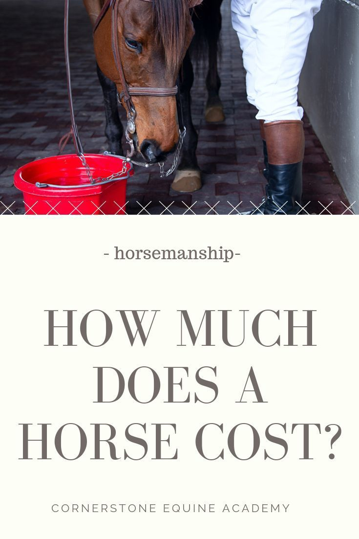 Pin On Horse And Equine Resources And Books
