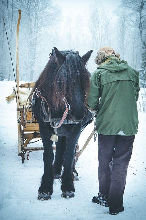 Släde. Slädtur med nordsvensk brukshäst. Vinter. Foto. Vart häst. Photography. North Swedish Draft Horse. Sleigh ride. Winter. Black horse. Photo by Swedish photographer Maria Lindberg