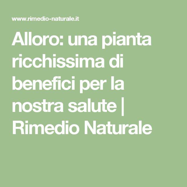 Alloro: una pianta ricchissima di benefici per la nostra salute   Rimedio Naturale