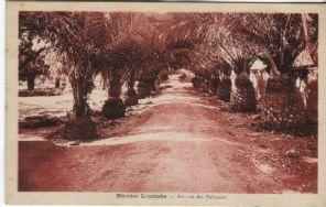 Photo Albert, Algeria Postcard - Mercier Lacombe Avenue des Palmiers (Alger)
