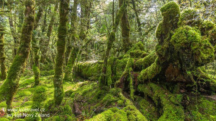 Prales u jezera Gunn, Milford Road, Fiordland, Nový Zéland #NewZealand #cestovani #travel