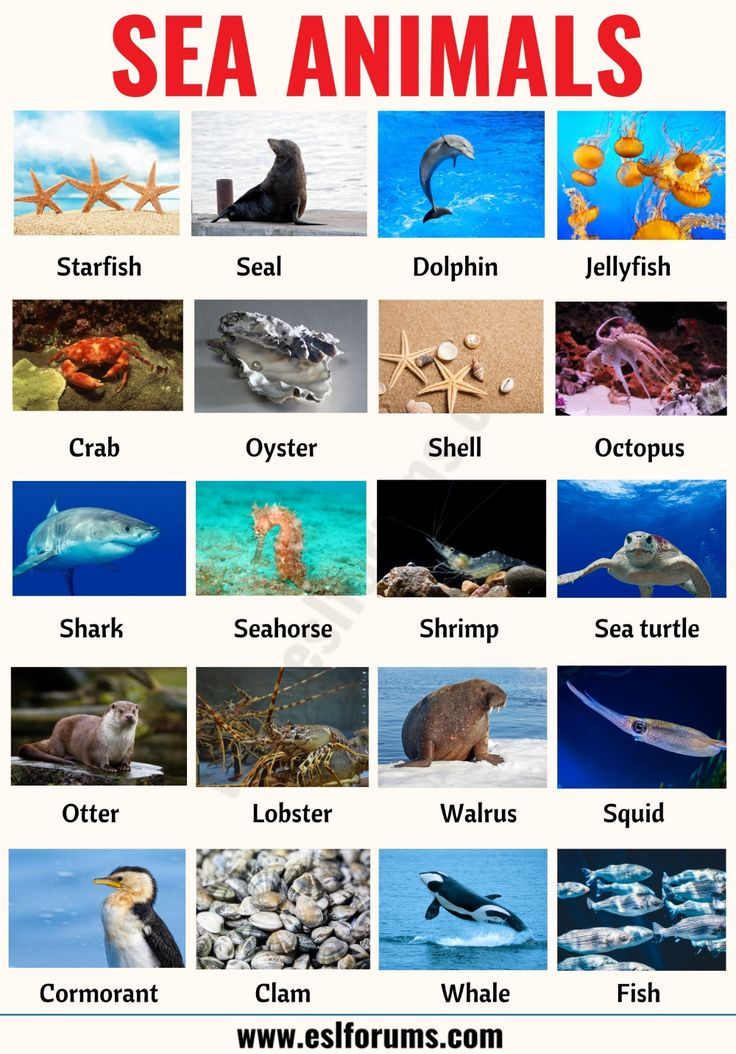 Sea Animals List of 20+ Interesting Sea, Ocean Animals