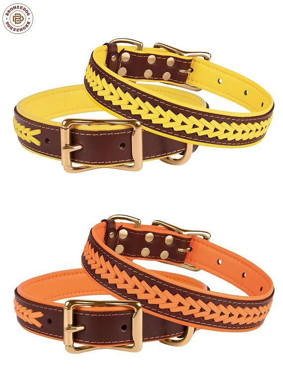 Best Dog Collars Redmond Or