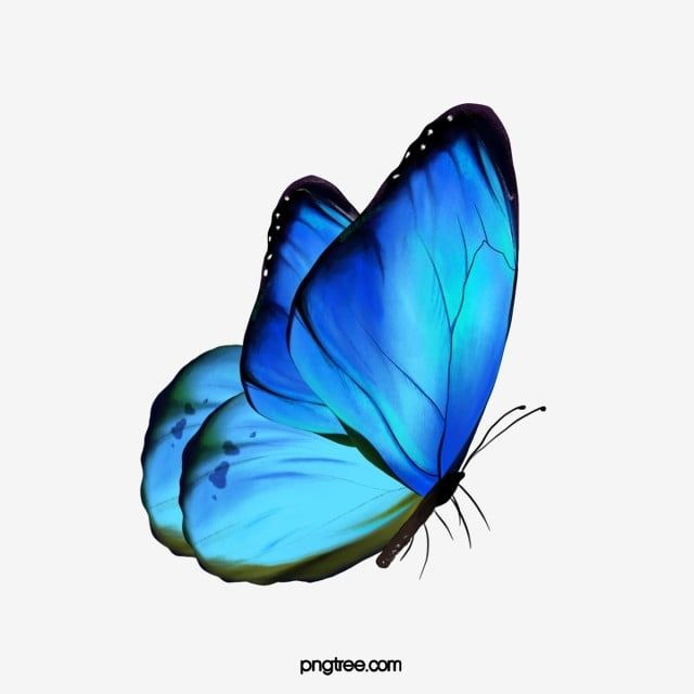 Butterfly Butterfly Clipart Blue Fly Png Transparent Clipart Image And Psd File For Free Download Butterfly Clip Art Butterfly Background Blue Butterfly Wallpaper