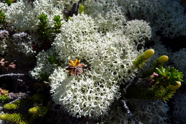 53 best BIOME: Tundra images on Pinterest | Biomes and ...