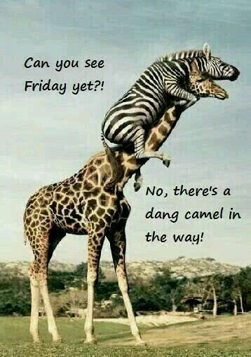 LOL! HUMP DAY IN THE WAY