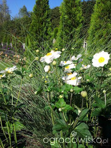 Moja codzienność - ogród Oli - strona 985 - Forum ogrodnicze - Ogrodowisko