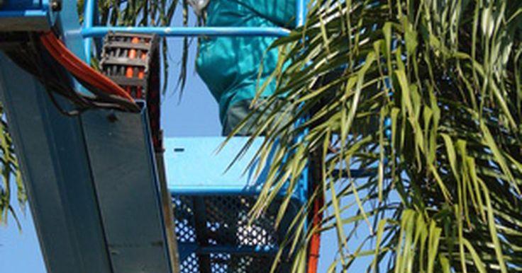 Leyes relacionadas con la tala de árboles. Las leyes estatales con respecto a la poda de árboles varían. Sin embargo, casi todos los estados tienen leyes sobre quién puede podar árboles y las circunstancias en las que pueden hacerlo. Los ciudadanos no pueden simplemente podar árboles públicos cuando se convierten en una molestia, sino que deben ponerse en contacto con el estado o municipio ...