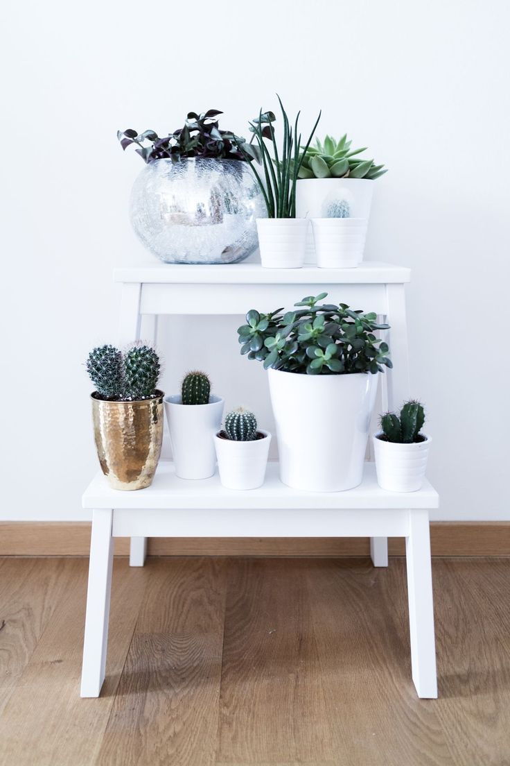 Small and large cacti arranged on a white footstool.