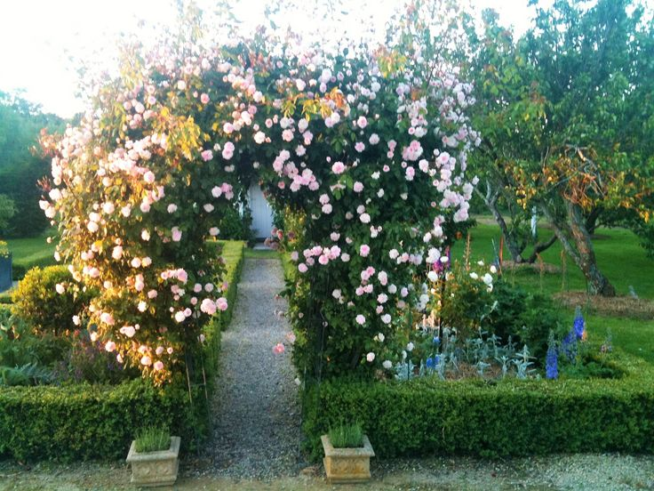 Sweetheart Rose Arch.  Back garden