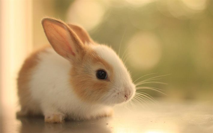 Download Wallpapers Cute Rabbit Cute Cute Bunny Pictures