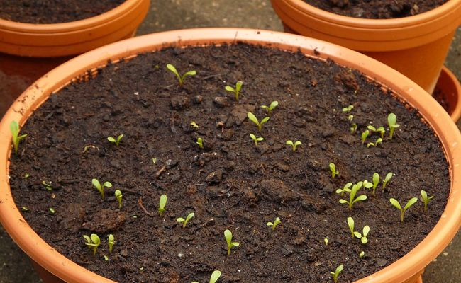 Jardiner En Avril Que Planter Semer Et Faire Au Jardin