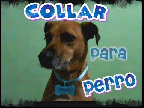 Como hacer un collar casero para perro diy collar basico for Como hacer un collar para perro