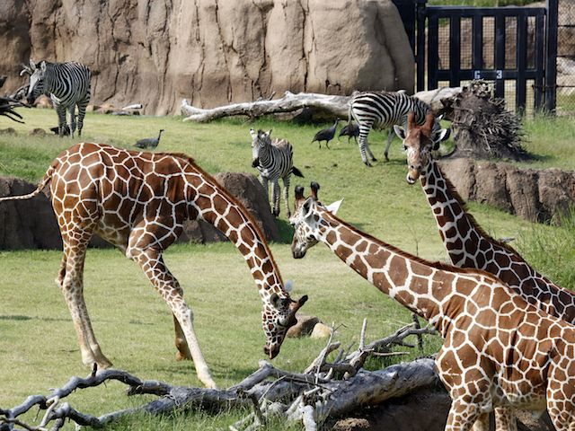 Elegant Today is a special day of the year for North Texas kids Dollar Day at the Dallas Zoo For many today is the one day that the entire family can afford