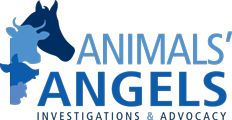 Thank You for the Tremendous Job you do taking on the horrific Kill Auction Industry.   Animals Angels - North America