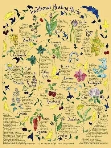 Traditional healing herbs