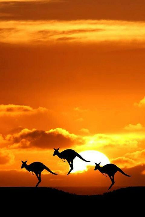 There's something about these three kangaroos jumping in unison in front of the orange sky rising sun that's just peaceful, brings a smile.
