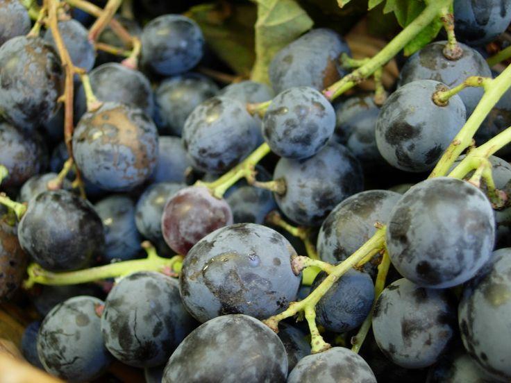 grappoli d'uva al mercato