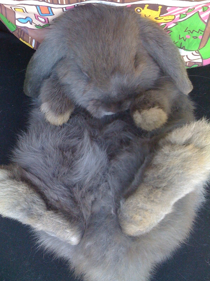 Fluffy: Animal Pics, Pet Bunny, Fast Food, Animals Unknowns, Fluffythings