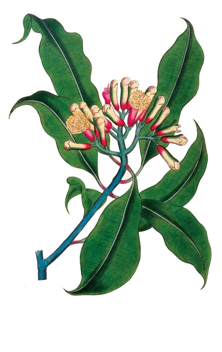 The Best Herbs for Pain Relief—Clove essential oil is an age-old remedy for toothaches. Put a drop on a sore tooth while waiting to see the dentist.