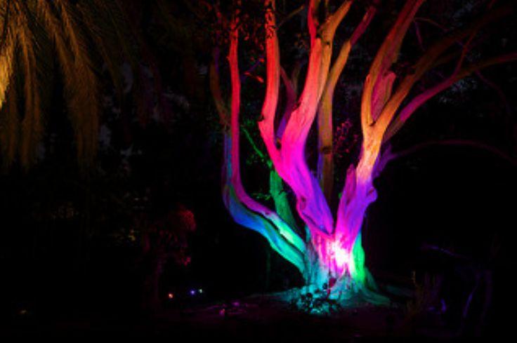 1000 Images About Led Multi Color Landscape Accent