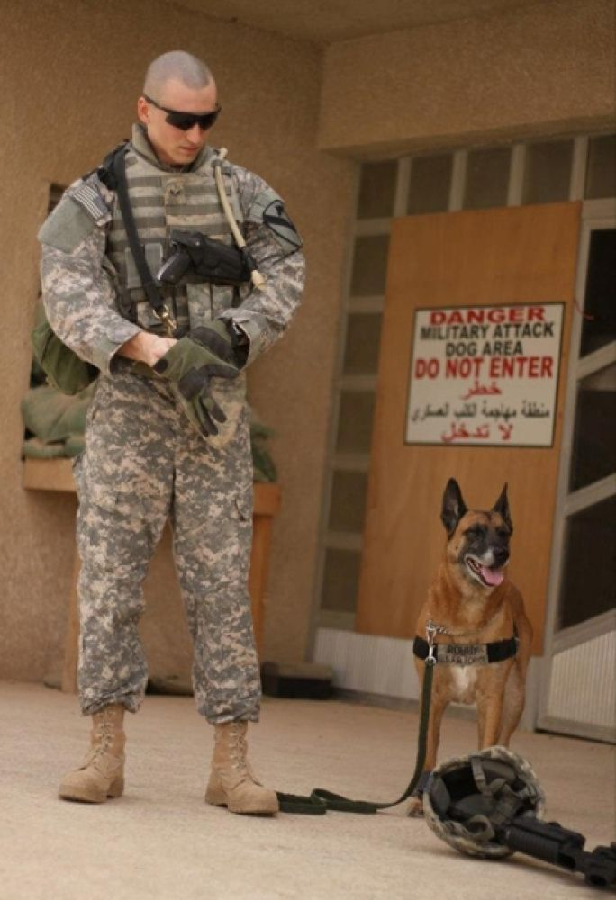 Great Soldier Army Adorable Dog - 48767841cdde5fd8ee84de2d7410d8a8--military-police-military-working-dogs  2018_974476  .jpg