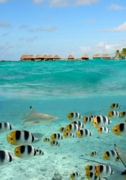 Bora Bora Real Estate | Tahiti Homes for Sale | French Polynesia Waterfront Homes|Beachfront Homes|Bora Bora Estate Agents