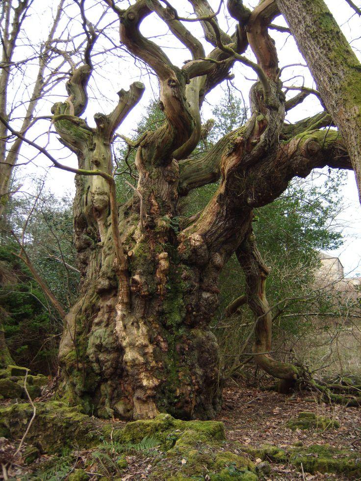 celtic sacred places | Celtic Trails | Ley Line Tours Scotland/Knights Templar Location Tours ...
