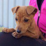 ZERGportal - Hundevermittlung | Tiere suchen ein Zuhause | Tierheim Hunde und Katzen