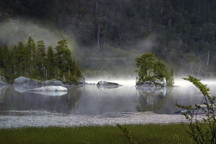 Misteriosa natura - Parque Tagua Tagua (Patagonia - Chile)