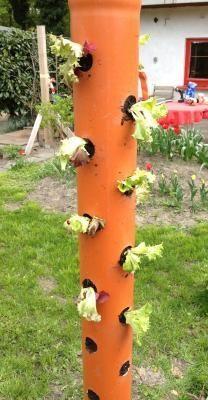 Sehr gute Anleitung wie die Rohre bestückt werden mit Tomate, Salat oder Kohlrabi. Ich könnte mir auch Erdbeeren vorstellen in meinem kleinen Garten! http://www.expli.de/anleitung/der-salatbaum-bzw-die-pflanzsaeule/fertig-28308/ Der Salatbaum bzw. die Pflanzsäule