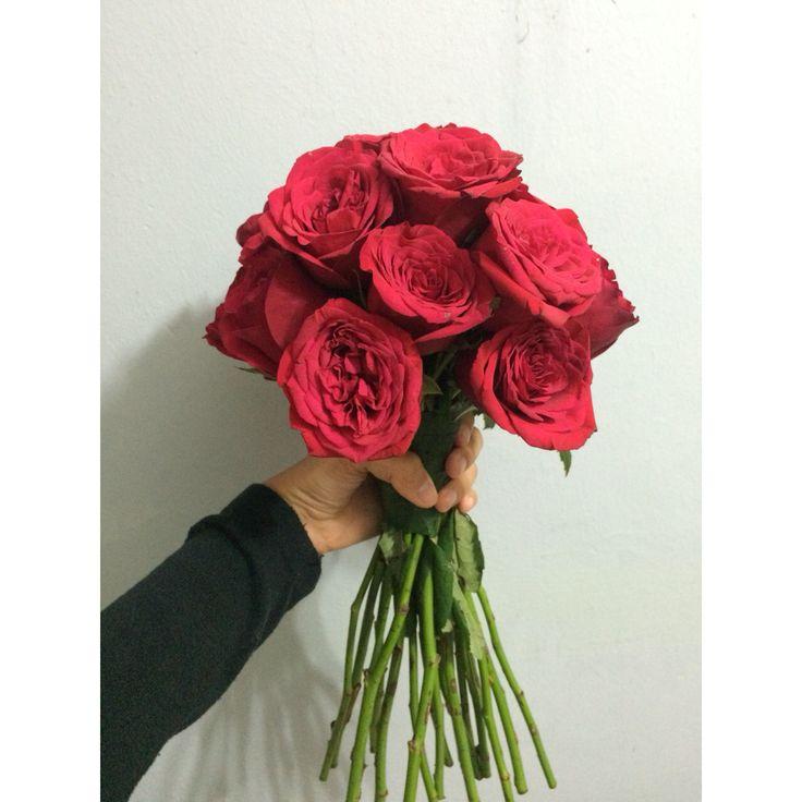 ; beautiful roses!