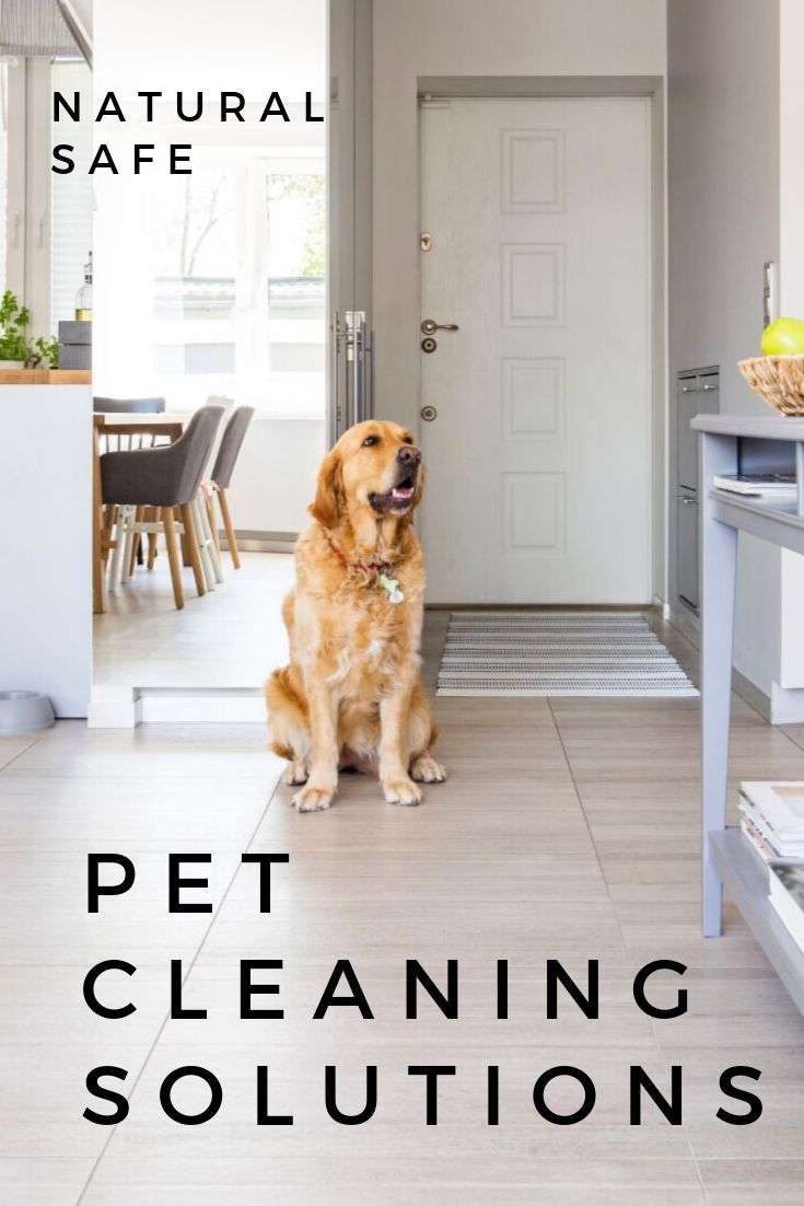 Natural Pet Cleaning Solutions Dog Cleaning Cleaning Solutions