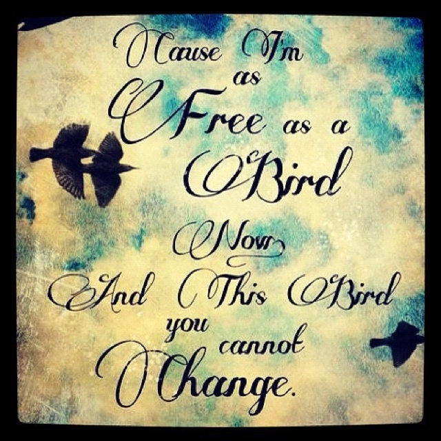 &&& this bird you cannot chaaaange!