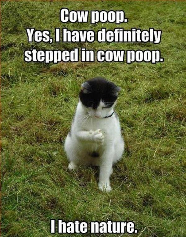 Cow poop.
