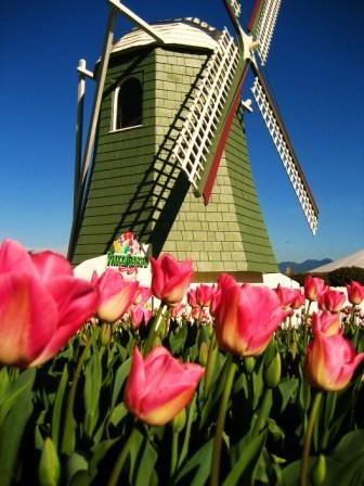 Skagit Tulip Festival - must see sometime!