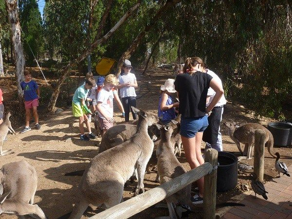 Perth's favourite day trip - John Forrest National Park